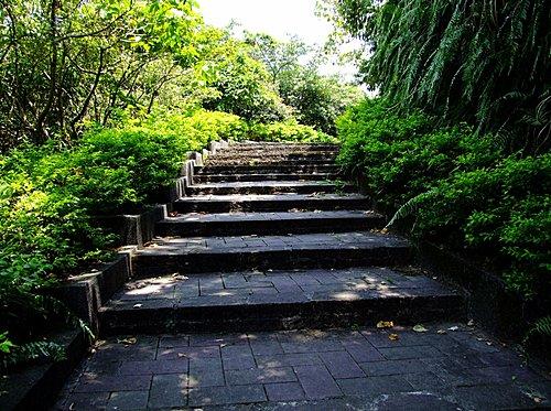 大湖公園岸邊的幽林步道也值得走一走。
