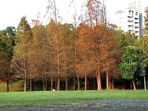 大湖公園內風景優美,不僅湖光山色相疊,還有如茵綠葺,成為電視劇、廣告取景的首選地點。